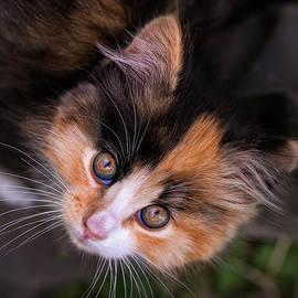 Jurgen Lorenzen - Cute Kitty