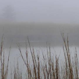 Belmont Marsh Ghost Tree by Lin Grosvenor