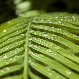 Bending Ferns by Carolyn Marshall