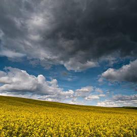 Davorin Mance - Beneath the gloomy sky