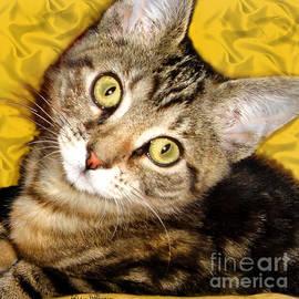 Alicia Hollinger - Bengal Cat Kitten