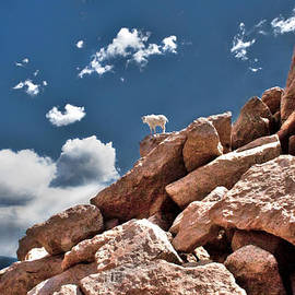 Tejas Prints - Between a Rock and a Hard Place