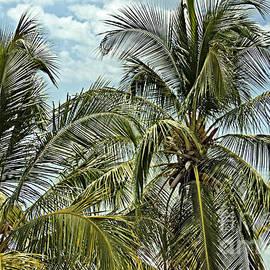Beyond the Palms by Bob Hislop