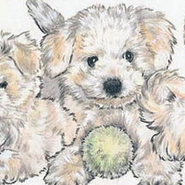 Barbara Keith - Bichon Frise Puppies