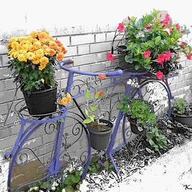 Bicycle With Flowers by Kelly Schutz