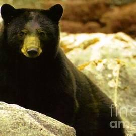 Blackwater Studio - Big Bend Black Bear