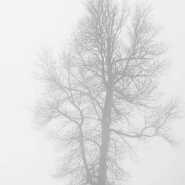 Cheryl Baxter - Big Tree