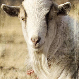 Billy Goat by Pam  Holdsworth