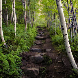 Birch Woods Hike by Donna Doherty