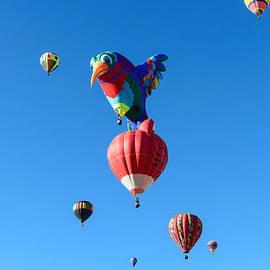 Bird Balloon by John Johnson