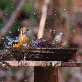 Mihir Joshi - Bird Bath