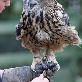 Graham Markham - Bird in the Hand...