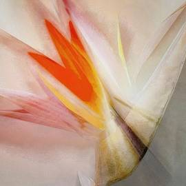 Gun Legler - Bird of Paradise