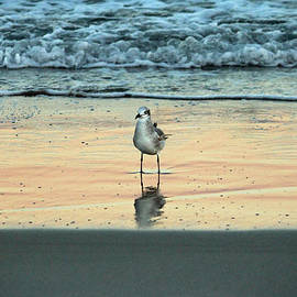 Cynthia Guinn - Bird Reflection