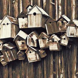 Marcia Colelli - Birdhouse Condominium