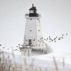 Linda Kerkau - Birds and Lighthouse