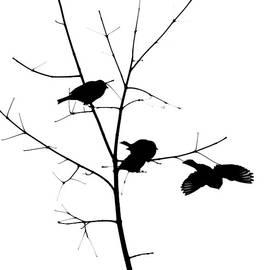 Alexander Senin - Birds - Featured 3