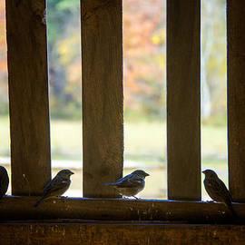 Birds in Barn Window by Donna Doherty