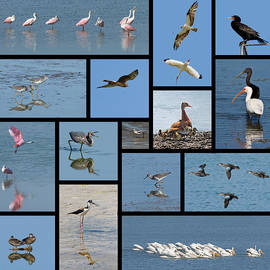Dawn Currie - Birds of the Click Ponds