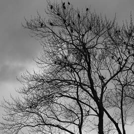 A Grey Day by George Pennington