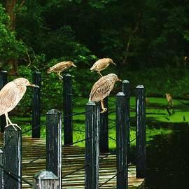 Chuck  Hicks - Birds On A Wire