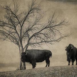 Bison Beauties by Priscilla Burgers
