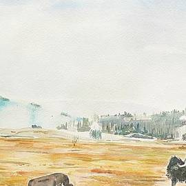 Geeta Biswas - Bison in Yellowstone