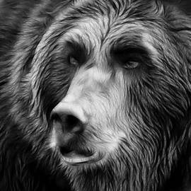 Athena Mckinzie - Black and White Grizzly Bear