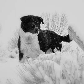 Lisa Holland-Gillem - Black and White in the Snow