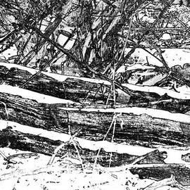 Karen  Majkrzak - Black and White in the Woods