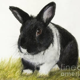Black And White Pet Rabbit by Kate Sumners