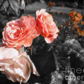 Doc Braham - Black and White Roses
