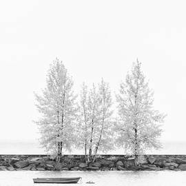Black And White Square Tree  by U Schade