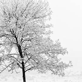 Black And White Tree  by U Schade