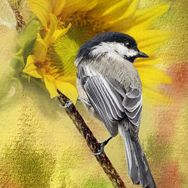 Diane Schuster - Black Capped Chickadee Checking Out The Sunflowers