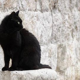 Oscar Gutierrez - Black cat against a stone wall