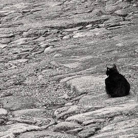 Menega Sabidussi - Black Cat on Weathered Cobblestones