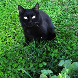 Russell Dudzienski - Black Cat