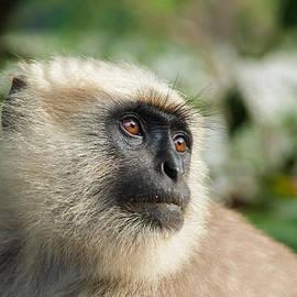 Nila Newsom - Black Faced Monkey