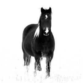Black Horse by Barbara Henry