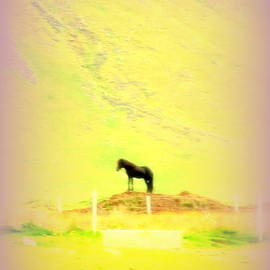 Hilde Widerberg - Think Of This Black Stallion The Next Time You Are Feeling Alone