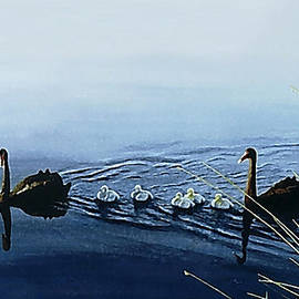Black Swans by Hartmut Jager
