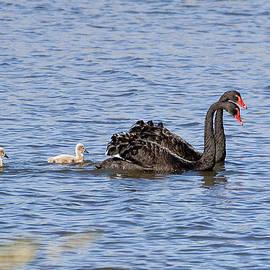 Steven Ralser - Black swans
