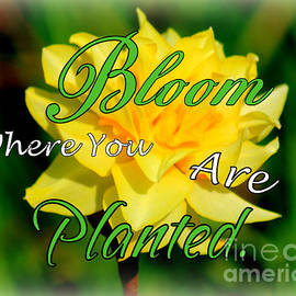 Bloom Where You Are Planted by Kathy  White
