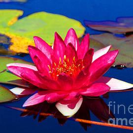 Diana Sainz - Blooming Lily