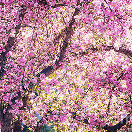 Bloomin' Tree by Roselynne Broussard