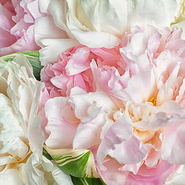 Blooming peonies by Zina Zinchik