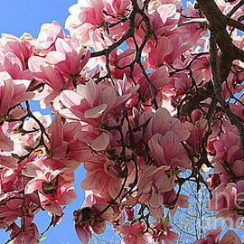 Blooming Pink Magnolias by Dora Sofia Caputo
