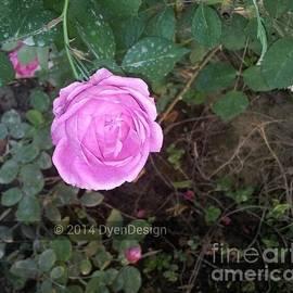 Dye n  Design - Blooming Rose
