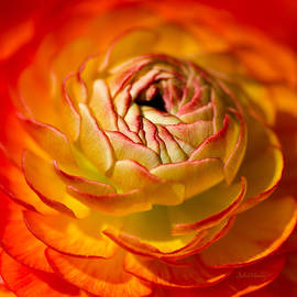 Bloomingdale Tangerine Buttercup by Julie Palencia